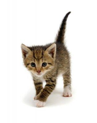 Cute tabby kitten isolated on white