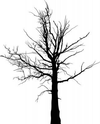 Fototapeta czarna sylwetka drzewa suche na duży biały