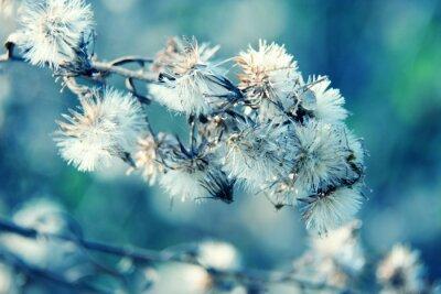 Fototapeta Czarno-białe abstrakcyjne tło kwiat