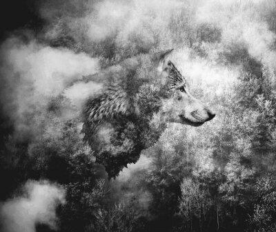Fototapeta Czarno-biały kolaż: wilcza głowa i mglisty las.