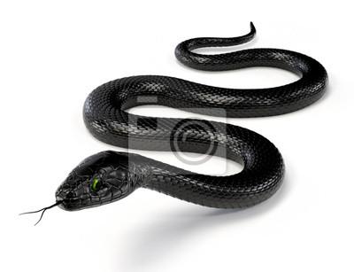 Fototapeta Czarny wąż samodzielnie na białym tle