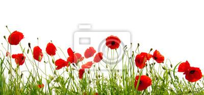 Fototapeta czerwone maki na białym