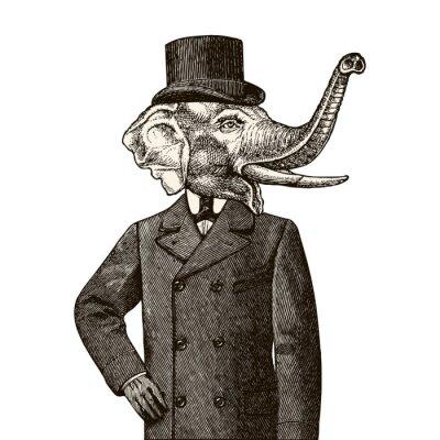 Fototapeta Człowiek słoń