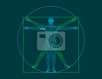 Fototapeta Człowiek witruwiański. Model szkieletowy ludzkiego ciała. Ilustracja kontur wektor