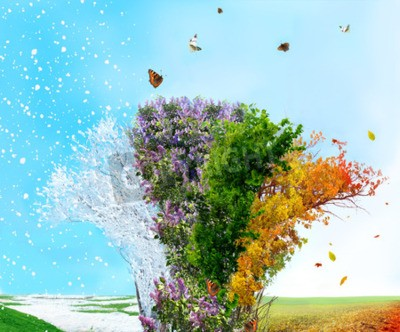 Fototapeta Cztery pory drzewa