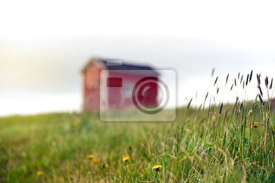 Fototapeta Dandelions and grass growing near tiny red building in Newfoundland countryside