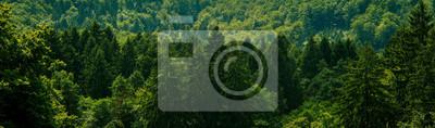 Fototapeta Dark green forest landscape