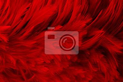 Fototapeta dark red feathers background