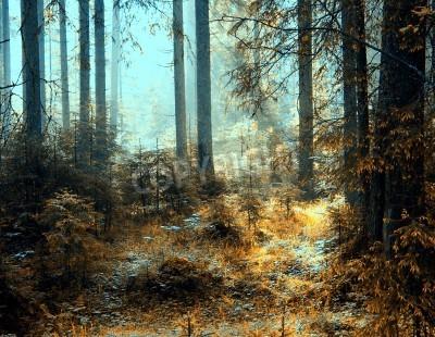 Fototapeta Dech w piersiach widok jak słońce świeci przez las w mglisty dzień.