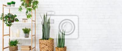 Fototapeta Decorative home plants concept