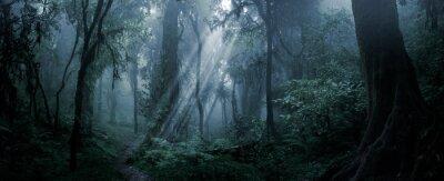 Fototapeta Deep tropical forest in darkness