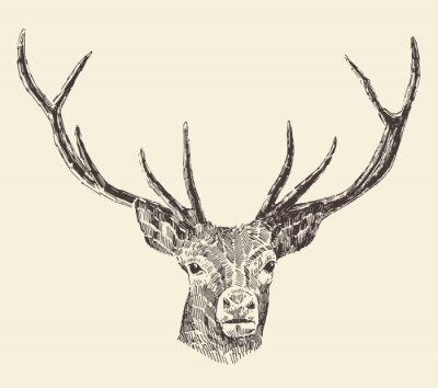 Fototapeta Deer Head Vintage ilustracji, wyciągnąć rękę, Wektor