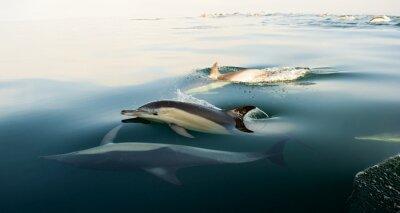 Fototapeta Delfinów, kąpiel w oceanie