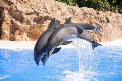 Fototapeta Delfiny skok