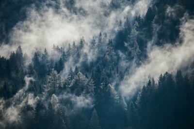 Fototapeta Dense morning fog in alpine landscape with fir trees and mountains.