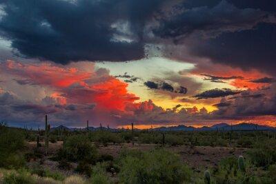 Fototapeta Desert Sunset