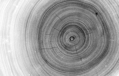 Fototapeta Detailed macro view of felled tree trunk or stump. Black and white organic texture of tree rings with close up of end grain.