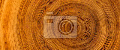 Fototapeta Detailed warm dark brown and orange tones of a felled tree trunk or stump. Rough organic texture of tree rings with close up of end grain.