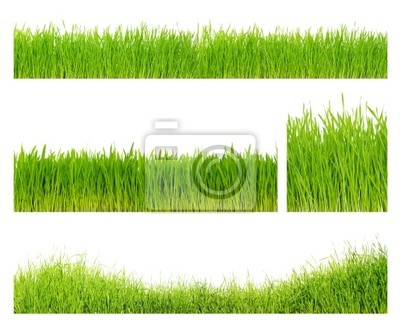 Fototapeta Different grass