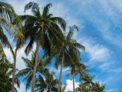 Fototapeta Dłoń drzewo z błękitnego nieba