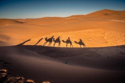 Fototapeta Długie cienie z karawaną wielbłądów na pustyni