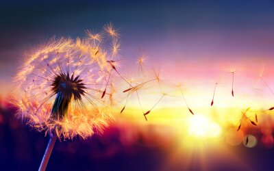 Fototapeta Dmuchawiec w Sunset - Swoboda życzeń