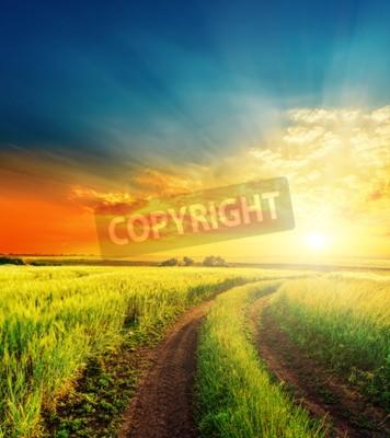 Fototapeta dobre słońca i drogowego w zielonych polach
