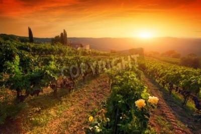Fototapeta Dojrzałe winogrona wina na winorośli w Toskanii we Włoszech. Malownicze gospodarstwa wina winnic. Sunset ciepłe światło