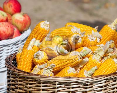 dojrzałe zboże i jabłka w koszach