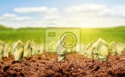 Fototapeta Dolarów amerykańskich rosną z ziemi