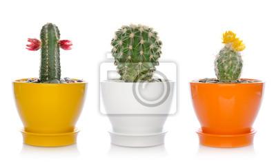 dom, kaktusy kwiaty