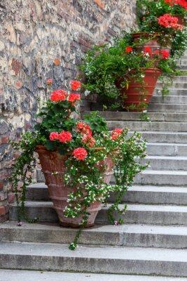 Fototapeta Donice na schodach