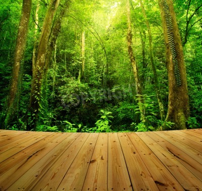 Fototapeta Drewniana podłoga i Tropical Rainforest krajobrazu, Malezji, Asia