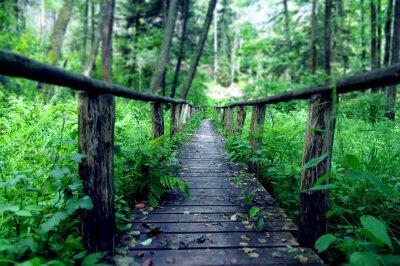 Fototapeta Drewniany most w środku lasu, Susiec, Polska