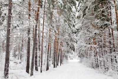 Fototapeta Droga w lesie zimą