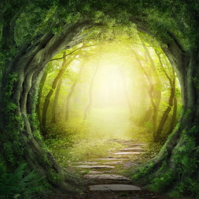 Fototapeta Drogi w ciemnym lesie