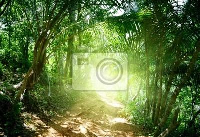 drogi ziemi w dżungli Dominikanów