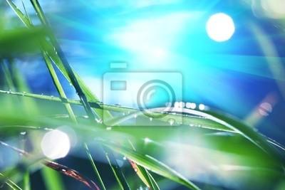 Fototapeta drops