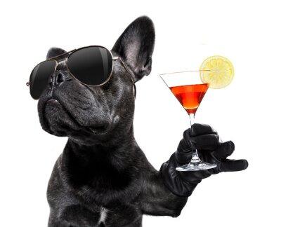Fototapeta drunk dog drinking a cocktail