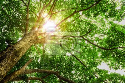 drzew leśnych. charakter zielone światło słoneczne drewna tła.