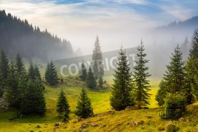 Fototapeta drzew na łące pomiędzy zboczami z drzew iglastych lasów we mgle pod błękitnym niebie przed wschodem słońca