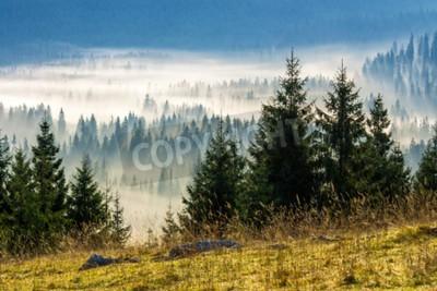 Fototapeta drzew na łąki w dół woli do lasu iglastego w mglisty górach Rumunii