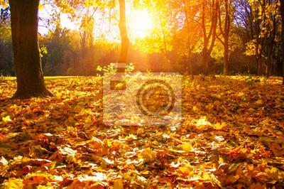 drzewa jesienią z promieni słonecznych