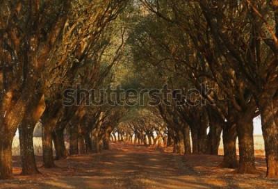 Fototapeta Drzewa, pola i naturalne krajobrazy oraz zalesione drogi