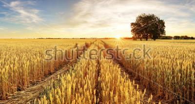 Fototapeta Drzewo i pole pszenicy