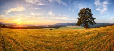 Fototapeta Drzewo na charakter panorama landcape