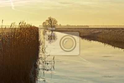 Drzewo odzwierciedla w kanale o świcie w zimie