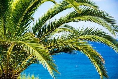 Fototapeta drzewo palmowe