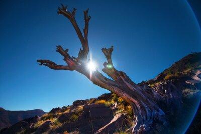 Drzewo suche, Maroko