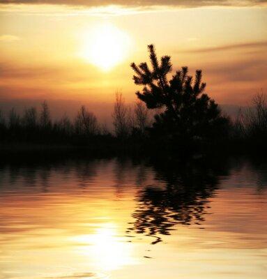 Fototapeta Drzewo sylwetka na zachodzie słońca
